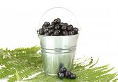 ripe blueberries in silver bucket on fern close-up