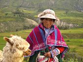 Old Peruvian Woman And Her Alpaca