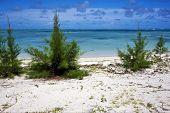 Bush In A Beach In Mauritius