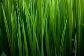 grüne Gras Hintergrund