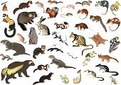 illustration with small animals collection isolated on white background
