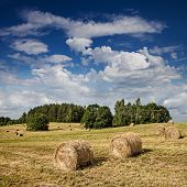 Big hay rolls on a beautiful field