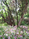 Forest Landscape With Fallen Petals