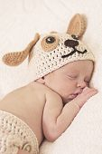 picture of knitted cap  - cute newborn baby sleeps in a knitted hat dogs - JPG