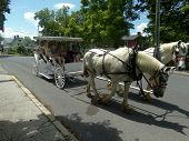Carriage Ride through Lexington, VA