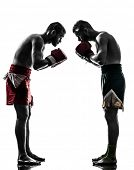 two caucasian  men exercising thai boxing saluting in silhouette studio  on white background