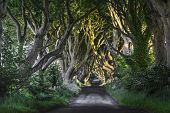 stock photo of ireland  - The Dark Hedges Co - JPG