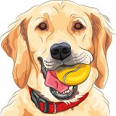 Vector Funny Dog Breed Golden Retriever With Ball
