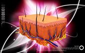 pic of fat cell  - Digital illustration of Skin in colour background - JPG