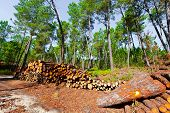stock photo of afforestation  - The Logging in the Forest of Portugal - JPG
