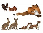 Collection of wild mammals