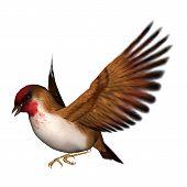 Songbird Scarlet Finch