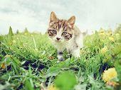 Curious Kitten On The Grass