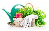 flowers and green plants for gardening with garden tools isolated on white background