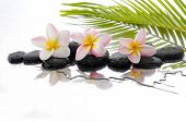 Black stones and three Frangipani and palm leaf background