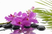 Lying down pink branch orchid with black stones with green palm