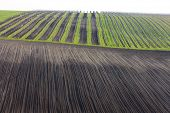 vineyards with field, Southern Moravia, Czech Republic