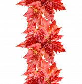 Red maple leaves seamless background