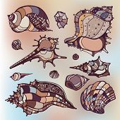 picture of beach shell art  - Sea shells collection - JPG