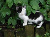 Gato sob folhas
