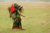 SAUHARA, NEPAL, NOVEMBER 22: Farmer woman carrying plants in a grape basket, walking in a grass area