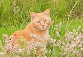 Cute orange tabby cat sitting in tall grass, looking at the viewer