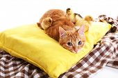 Red cat with cute ducklings and little chicken on yellow pillow close up