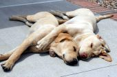 """""""Spooning"""" Dogs"""