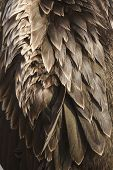 Background image of bird feathers