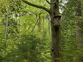 foto of nesting box  - nest box for birds in the wood - JPG