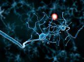2 Neurons