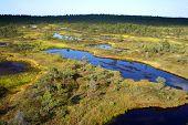 estonian bog
