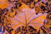 Closeup of Colorful Intricate Fall Foliage.