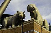 Tigers at park