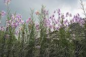 Orchids Plantation