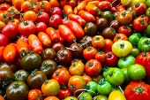 Different varieties of tomato's