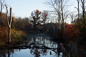 Wetlands in Autumn