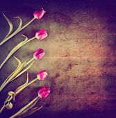 tulips on a wooden board. good for mother's day, easter, valentine's day or other holidays symbolizing love toned with a retro vintage instagram filter