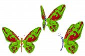 Green, Blue And Red Paint Made Butterfly Set