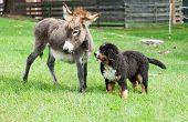 two farm animals, dog and donkey