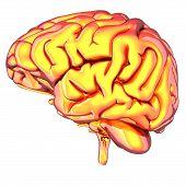 Glossy Brain