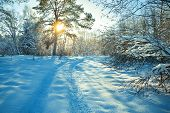 Rural Winter Landscape With Sunset, The Forest And The Road