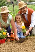 Grandparents Teaching Little Girl The Ways Of Gardening