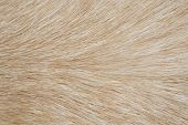 Dog Fur Close Up As Background