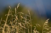 Blurred grass