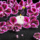 image of geranium  - beautiful spa concept of blooming dark purple geranium flower beads and candles in reflection water closeup - JPG