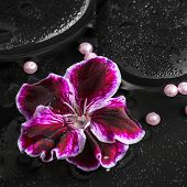 foto of geranium  - beautiful spa concept of geranium flower beads and black zen stones with drops in reflection water Royal Pelargonium closeup - JPG