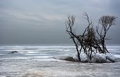 foto of frozen  - Winter landscape with trees - JPG