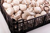 image of champignons  - raw fresh mushrooms champignon in the box - JPG