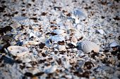 stock photo of bp  - Shells on Gulf Shores beach affected by BP - JPG